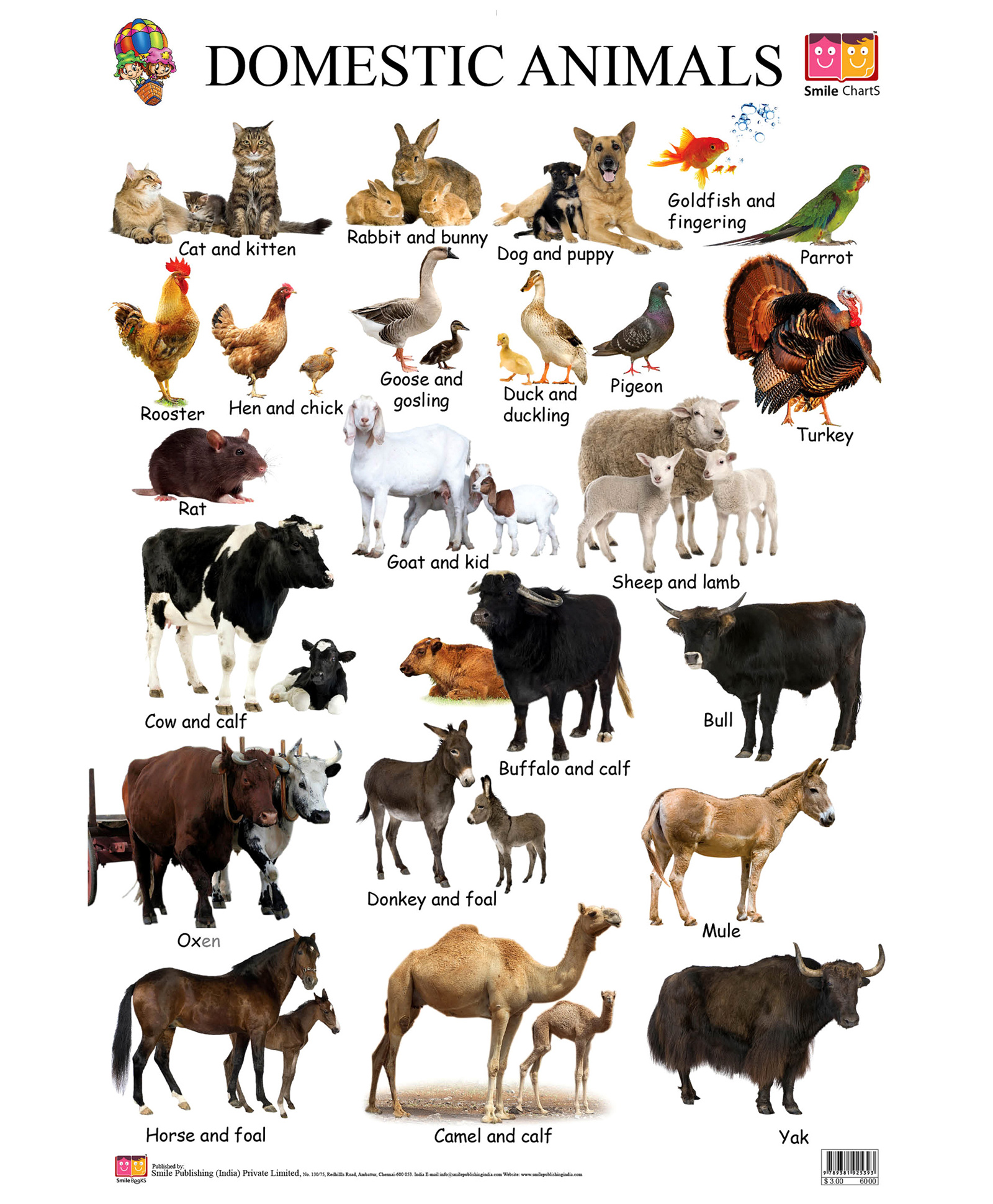 essay about domestic animals and their uses What are some uses of domestic animals update cancel answer wiki 5 answers what are some examples of domestic animals and their uses is a fish a domestic.